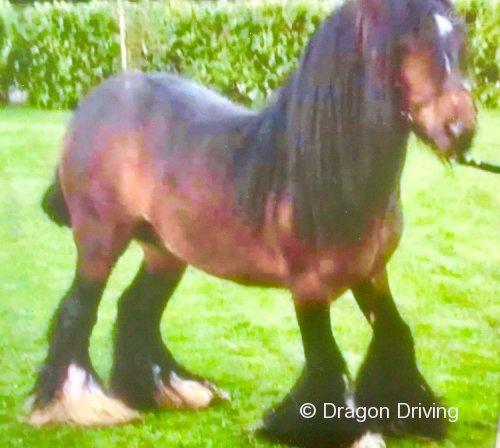 Filly in Foal