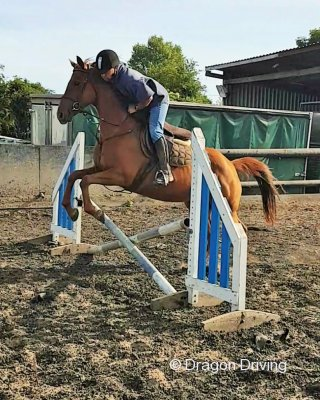 Ruby, 15.3hh TB Riding Mare