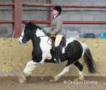 Essex Girl, 12.3hh Riding Mare