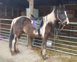 2 Year Old Colt