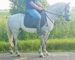 Harry, 13.2hh Riding Gelding