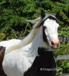 SD Amalie, 3 Year Old Filly