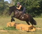 Cotes Black Sultan, 14.2hh Dales Riding Gelding