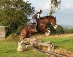 Glenside Rising Star, 18.3hh Clydesdale Stallion at Stud