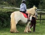 Saffie, 13.1hh Ride and Drive Mare