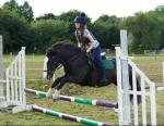 Sally, 14hh Riding Mare