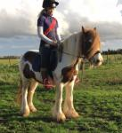 Dolly, 14hh Mare