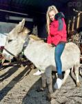 Perry, 11hh Donkey Gelding