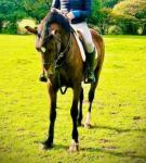 Maggie, 14.3hh Riding Mare