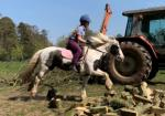 13.1hh Riding Mare
