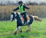 Miffy, 12.3hh Riding Mare