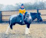 Dolly, 15.2hh Riding Mare