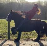 Romany, 12.2hh Ride and Drive Mare
